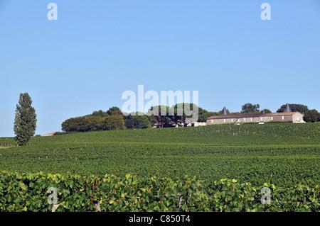 Vigneto Chateau Saint Georges Montagne Saint Emilion Gironde Aquitaine Francia Foto Stock