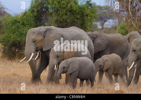 Famiglia di elefanti nel Parco Nazionale della Sierra Nevada, Spagna Foto Stock