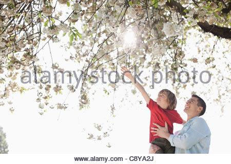 Padre e figlio giocare sotto agli alberi all'aperto Foto Stock