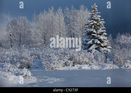 Snowcovered scena invernale di un piccolo laghetto e alberi nella valle di Portage, centromeridionale Alaska, inverno Foto Stock