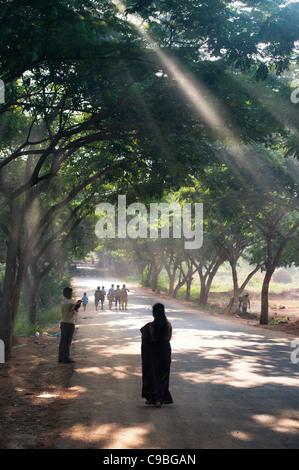Silhouette di una donna Indiana percorrendo a piedi un sole illuminava strada alberata. Andhra Pradesh, India Foto Stock