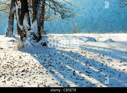 Ottobre mountain foresta di faggio con la prima neve invernale e lo scorso autunno le foglie sopra Foto Stock