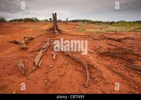 Suoli erosi in Sarigua national park (deserto) in Herrera provincia, Repubblica di Panama. Foto Stock