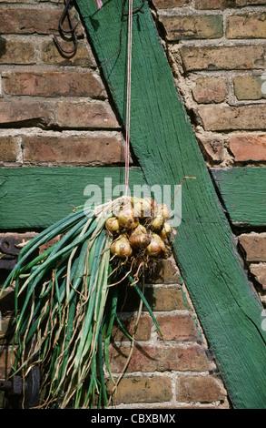 Cipolle, Zwiebeln, essere essiccate all'esterno in corrispondenza della facciata di un mezzo in legno agriturismo con fasci di colore verde e rosso mattone, Germania