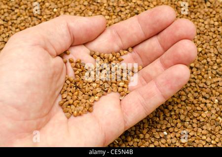 Il grano saraceno in mano Foto Stock