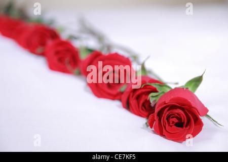 Le rose line up su un letto Foto Stock