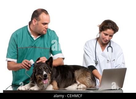 I veterinari esaminando un Border Collie con un otoscopio digitale davanti a uno sfondo bianco Foto Stock