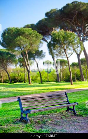 Banco solitario in un parco - grandi alberi in background Foto Stock