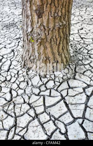Il tronco di un albero e rotto il fango di argilla nella Valle del Fiume Rosso. Winnipeg, Manitoba, Canada. Foto Stock
