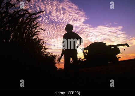 Un agricoltore che detiene frumento invernale si affaccia sul suo campo e attrezzatura di raccolta al tramonto vicino Foto Stock