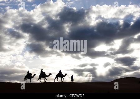 Silhouette di Berber uomo porta,cammelli lungo la cresta di una duna di sabbia in Erg Chebbi mare di sabbia vicino a Merzouga, Marocco Foto Stock