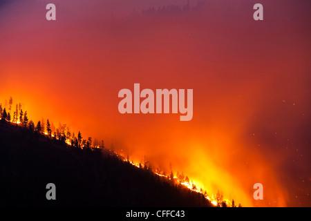 Un forrest fuoco sul fianco di una montagna in Montana.