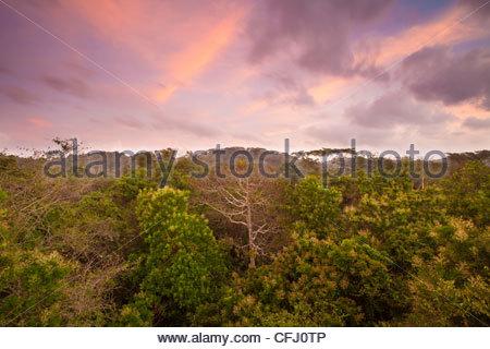 Alba nella foresta pluviale del Parco nazionale di Soberania, Repubblica di Panama. Foto Stock
