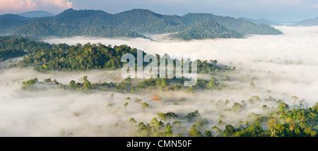 La nebbia e basse nubi appesa sopra Lowland Dipterocarp foresta pluviale, poco dopo l'alba. Cuore di Danum Valley, Sabah Borneo.