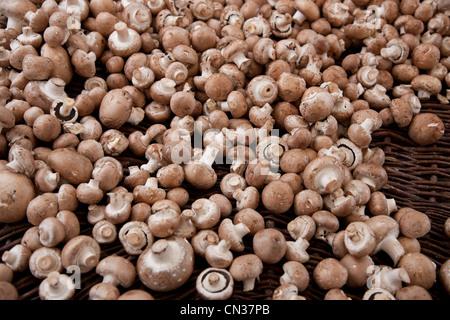 Funghi champignon