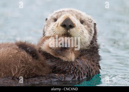 Femmina Lontra di mare azienda cucciolo neonato al di fuori dell'acqua, Prince William Sound, centromeridionale Foto Stock
