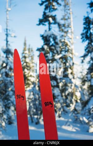 Posti numerati nel campo nevoso Foto Stock