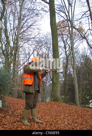 Sparatutto di un battue in piedi in un autunno del bosco di faggio con il fucile livellata, Germania Foto Stock