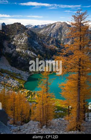 I larici a Asgaard Pass, alta sopra il lago Colchuck, nell'Incanto Lakes Wilderness dello stato di Washington Foto Stock