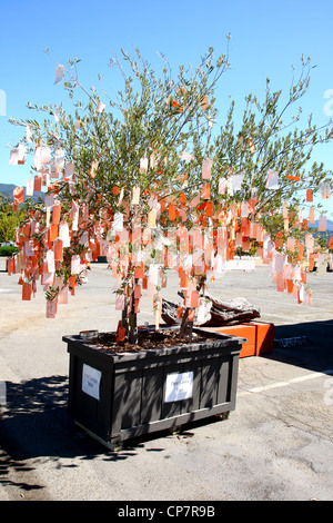 Arte STORE CALISTOGA Napa Valley California USA 06 Ottobre 2011