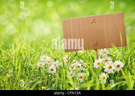 Tabellone vuoto sul prato con fiore a margherita Foto Stock