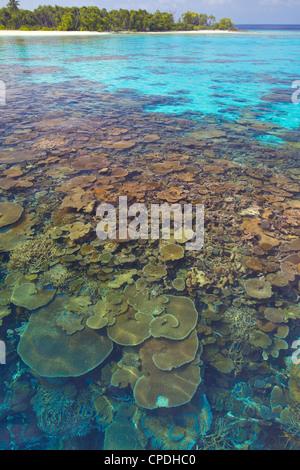 Piastre di corallo, la laguna e l'isola tropicale, Maldive, Oceano Indiano, Asia Foto Stock