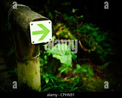 Freccia verde nel percorso del bosco Foto Stock