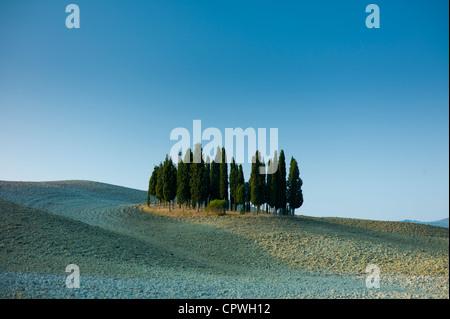 Boschetto di cipressi nel paesaggio di San Quirico d'Orcia nella Val d'Orcia, Toscana, Italia Foto Stock