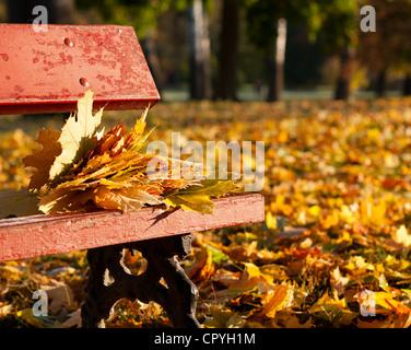 Foglie di acero su una panchina nel parco. Paesaggio autunnale