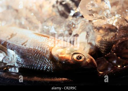 Pesce fresco in ghiaccio sul mercato Foto Stock
