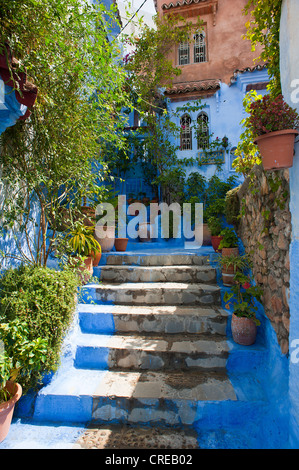 Stretto, blue-vicolo verniciato con gradini e piante nella Medina, la città vecchia di Chefchaouen, Marocco, Africa Foto Stock