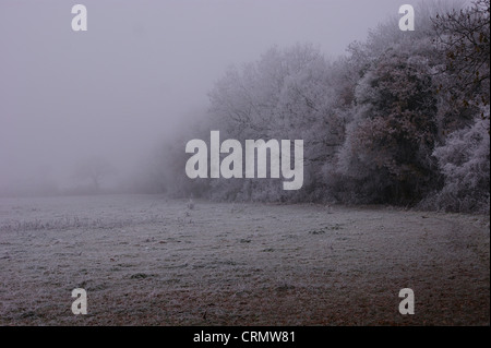 Trasformata per forte gradiente la brina su alberi, siepe e campi presi su un terribilmente freddo foschia mattutina Foto Stock