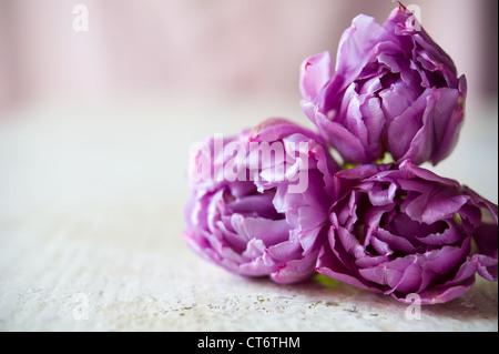 Bouquet di tre tulipani viola fissa sul tavolo bianco. La sfocatura dello sfondo con copia spazio, shallow DOF Foto Stock