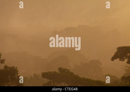 La nebbia di sunrise nel parco nazionale di Soberania, Repubblica di Panama. Foto Stock