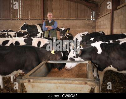 Agricoltore in piedi con le vacche nel fienile Foto Stock