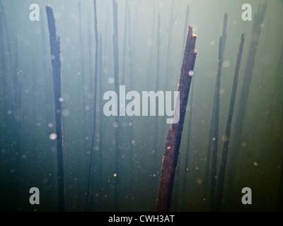 Sott'acqua,mondo subacqueo,abstract