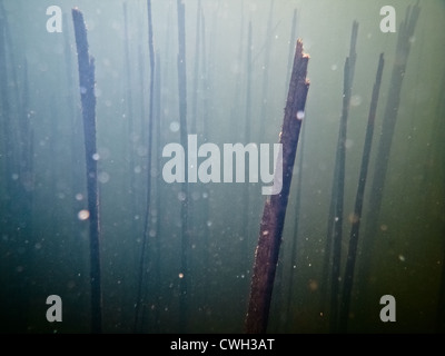 Sott'acqua,mondo subacqueo,abstract Foto Stock