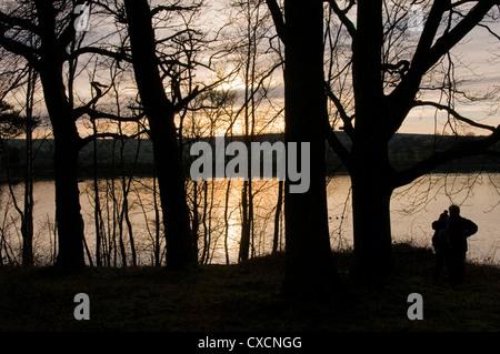 Coppia giovane (coccole) stagliano al tramonto contro il drammatico golden sky guardando fuori attraverso gli alberi Foto Stock