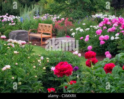 Peonia garden e panca. Adleman Peonia giardino, Salem, Oregon