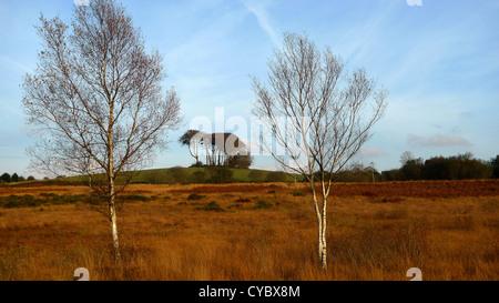 Terra incolta con argento di betulle in inverno, Gorseinon, Swansea, Galles. Foto Stock