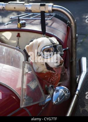 Golden Labrador seduto nel sedile passeggero di Morgan plus 4 autovettura indossando occhiali protettivi Foto Stock