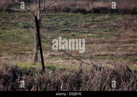 Estremità rotta di un recinto di filo spinato. Foto Stock