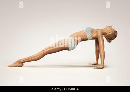 Lo scheletro stratificate su corpo femminile in rivolta verso l'alto plank pongono mostra allineamento scheletrico Foto Stock