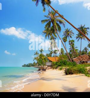Spiaggia tropicale con palme di cocco foto immagine for Disegni di casa sulla spiaggia tropicale