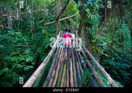 Ponte di bambù nell'interiore che conduce alla grotta del Millennio, Isola di Espiritu Santo, Vanuatu, South Pacific Foto Stock