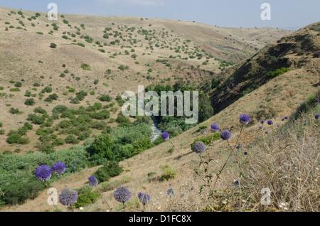 Vista del fiume Giordano da montagna Jordan River trail. Galilea superiore, Israele, Medio Oriente Foto Stock