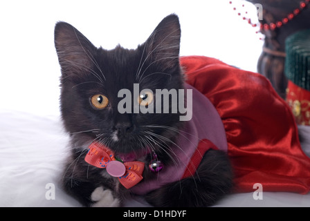 Orizzontale a tema natale immagine con un carino gattino nero vestito per la vacanza. Foto Stock