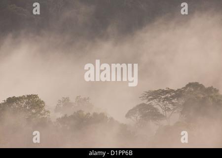 La nebbia allo spuntar del giorno nella foresta pluviale del Parco nazionale di Soberania, Repubblica di Panama. Foto Stock