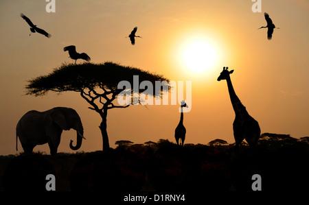 Sagome di animali in piedi sopra il tramonto su safari in Africa. Elefanti, giraffe, Uccelli Foto Stock