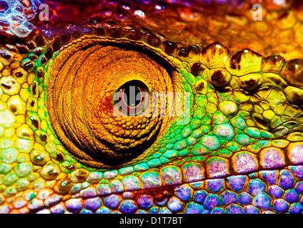 Foto di colorati occhio di rettile, closeup parte di testa del camaleonte, multicolore squamose della pelle di lucertola Foto Stock